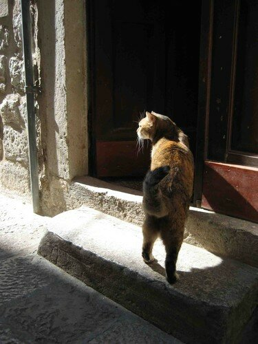 chat Dubrovnic 5