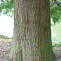 la vie ... un arbre