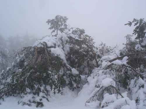 2008 12 22 Les arbres cassés par le poid de la neige au Mont Pilat