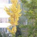 Pékin en automne