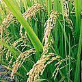 Petites recettes de beauté au riz et aux oeufs