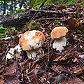 Un jour en forêts d'Aspe Barétous, le 19 septembre 2012...
