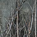 L'arbre, le bois, le papier et ses