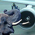 LUI OU L'APPEL DES ELEPHANTS A L'HARMATTAN DE <b>FRED</b> <b>FOREST</b>