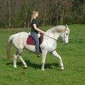 Les chevaux des sorderates