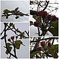 Jardin avril (14)