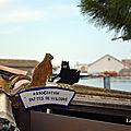 16/04/18 : les chats du mois d'avril