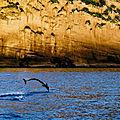 Mayotte. Les <b>dauphins</b>