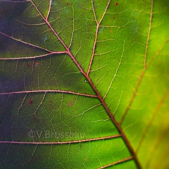 feuilles-automne15-25