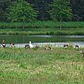 Lac de Tastoa 28061655