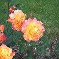 roseraie et parc geo charles