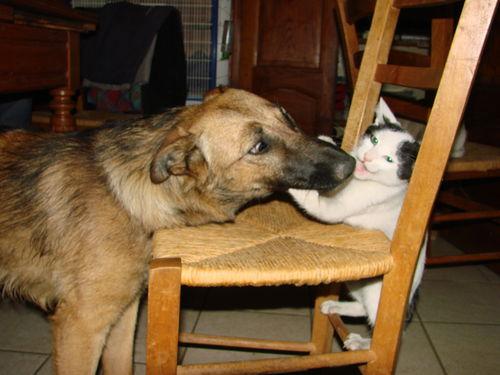 2008 07 02 Kapy qui joue avec le chat