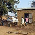 Les tourteaux de coton, aliment du <b>bétail</b>