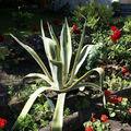 81 Bienvenue dans nos jardins
