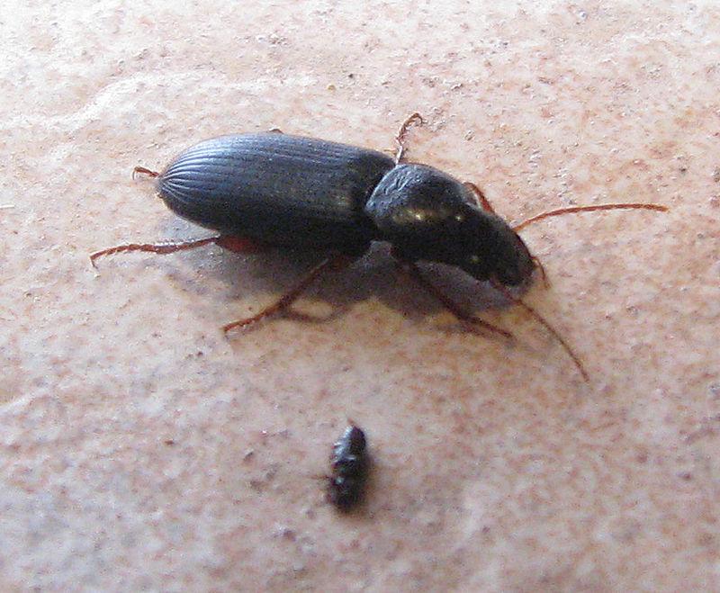 insecte sauteur dans maison ventana blog. Black Bedroom Furniture Sets. Home Design Ideas