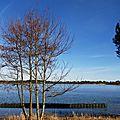 Lac Arjuzanx 05021624