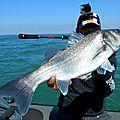 Swat shad delalande pêche