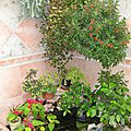 PLANTES RETOMBANTES 9