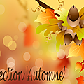 Collection 'Automne'