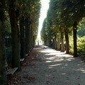Allée des bancs Jardin des plantes Orléans