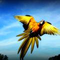 De MAGNIFIQUES <b>oiseaux</b>!!!!!!!!!!!!!!!