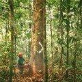 <b>Forêt</b> amazonienne