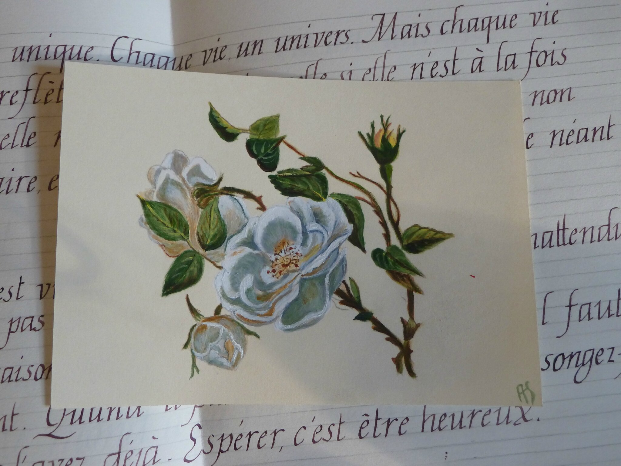 cartes peintes - roses blanches