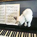 Catmusic & musicothérapie féline