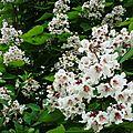 Fleurs de Leon 2406165