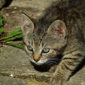 Les chats (98)