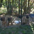 Le blog de Voxane, la crème du Bullmastiff