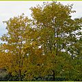 Feuillages automne 11101510