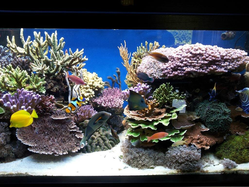 Un récif dans le 54....ou l'incroyable caverne coralienne d'Ali Baba