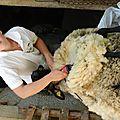 Emilie, 20 ans, tond les moutons ...