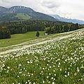 Pléïades, vaud, suisse