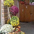 Un ptit tour à la fête des chrysanthèmes ...