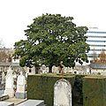 arbre vue d'ensemble (55)