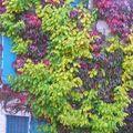 <b>Vigne</b> couleurs de Ville