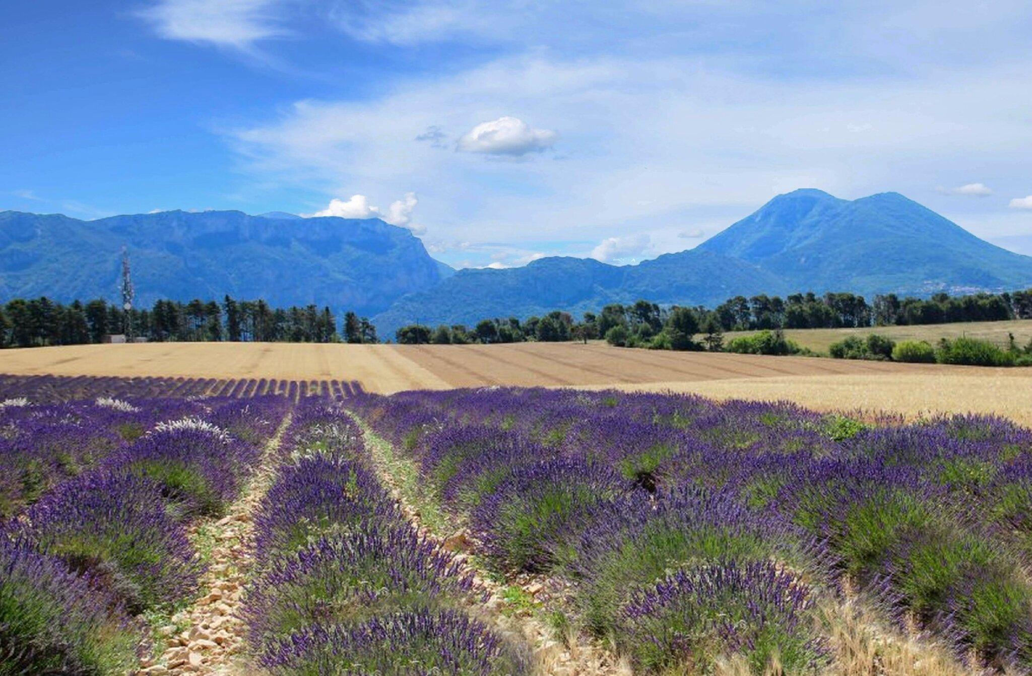 Le Plateau de Valensole