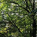 Au détour d'une forêt