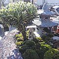 Des Jardins En Scene. Port : 06 63 85 11 99.Visible sur Instagram
