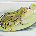 Collection ... affiche la grenouille / le poisson