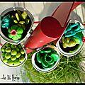 Tout un jardin de succulentes