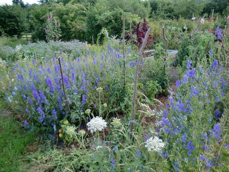 jardin 5 juillet