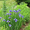 Le jardin en ce mois de juin