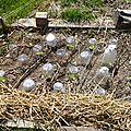 premières plantation sous abris