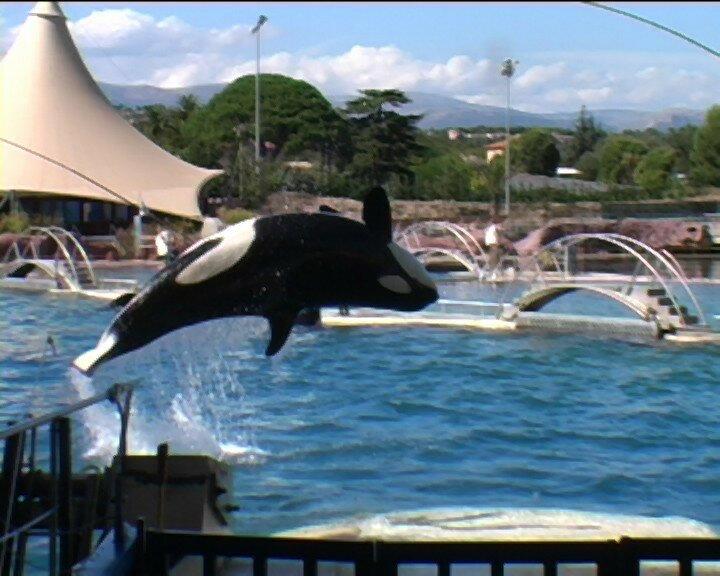 orque au Marineland