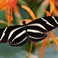 Butterfly (33)