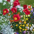 Fleuraison parisienne
