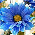 porte-coup-ah-fleur-bleue-img